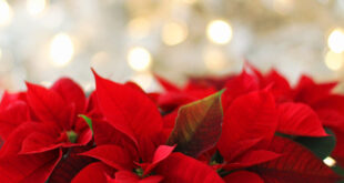 Le radici millenarie delle tradizioni natalizie