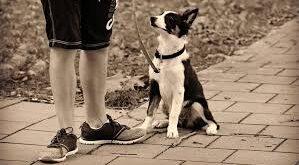 Le regole per accompagnare a spasso il vostro cane
