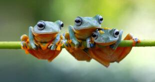Il boom evolutivo degli anfibi