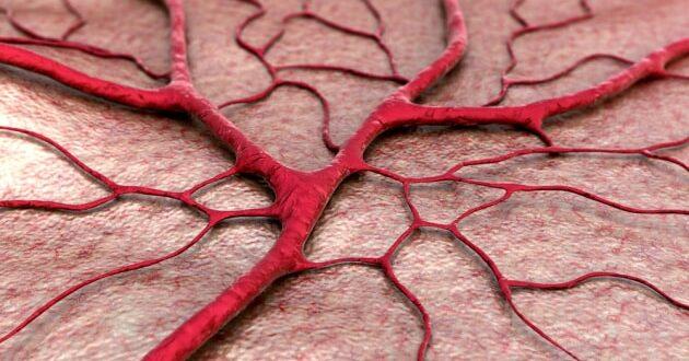 vaso sanguigno