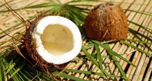 piante da cocco invasive nell'atollo di Palmyra