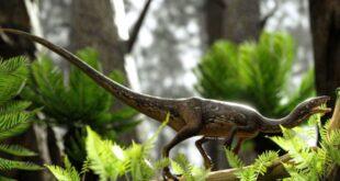dinosauro Buriolestes schultzi