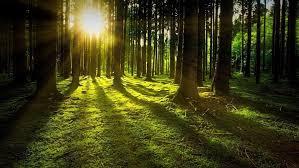 Le foreste al caldo sono più efficienti