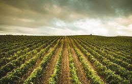 Cantina di vini Su'entu