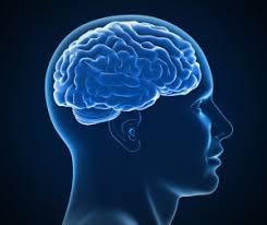 corteccia cerebrale