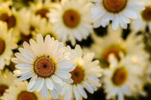 I fiori che curano l'uomo