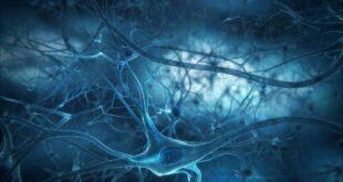 Neuroni dei moscerini