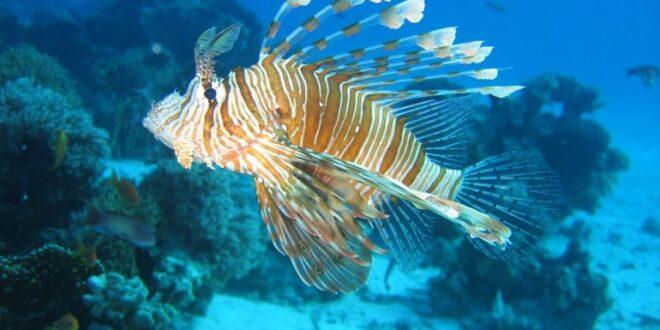 Pesci esotici, alghe invasive e granchi tropicali