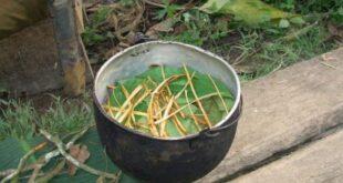 Tè ayahuasca