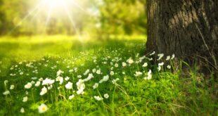 esposizione solare vitamina B3
