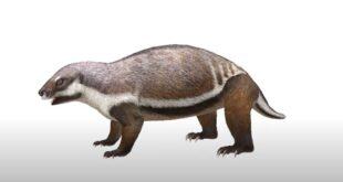 """Ecco l'Adalatherium, definito la """"bestia pazza"""" del cretaceo"""