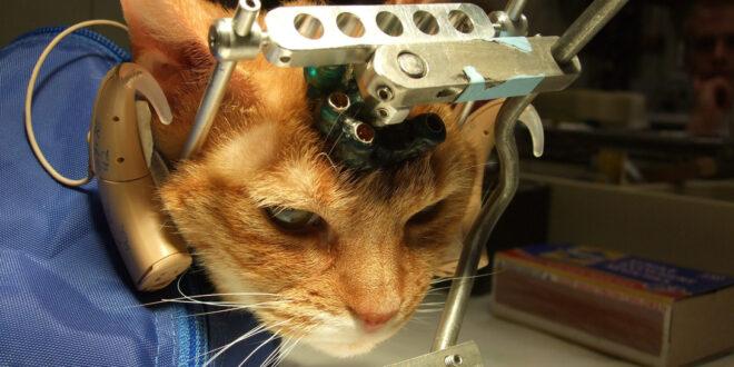 la sperimentazione sugli animali