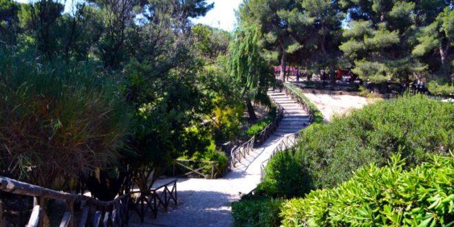 piante e alberi monte urpinu