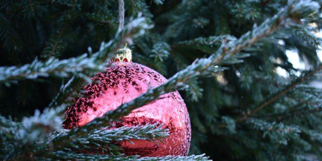 Natale ecosostenibile: l'albero naturale è più ecologico