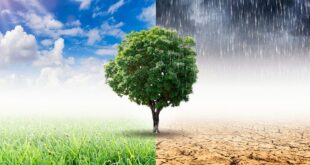 covid e clima