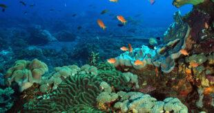 fondale oceanico