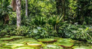 Dopo l'estinzione dei dinosauri le piante prosperarono