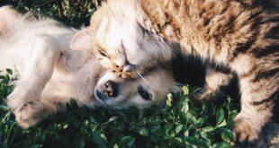 Bautiful, la bellezza di migliorare la vita di cani e gatti