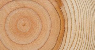 Nuovo tipo di legno