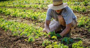 Riconversione ecologia dell'agricoltura