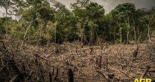 WWF: cancellata una vasta area di foresta