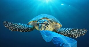 sea turtle and plastic bag Richard Carey 2048x2048 2