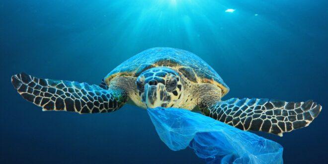 sea turtle and plastic bag Richard Carey 2048x2048 2
