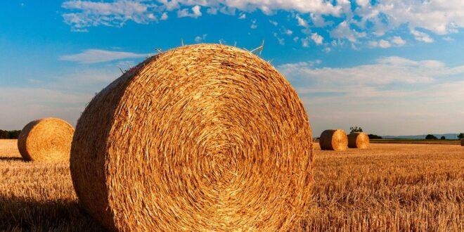 agricoltura, coldiretti