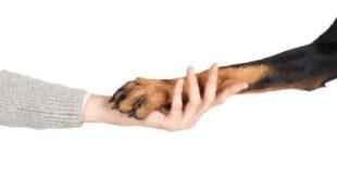 zampa cane mano umano