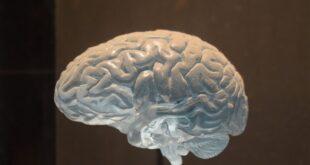 cerebrali