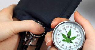 cannabis can help high blood pressure 1