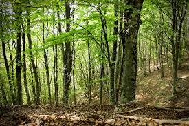 download 16 foreste