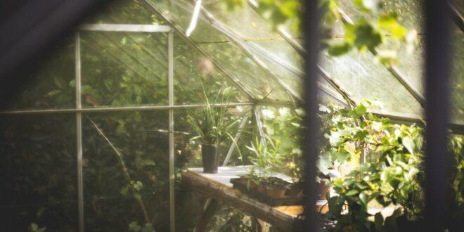 università, botanica, biodiversità