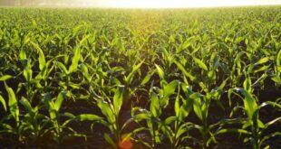 innovazione agricoltura 810x540 1