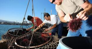pesca sardegna appesca