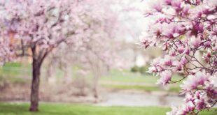 primavera, inverno, ciclone