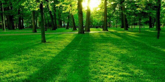 paur provvedimento ambiente
