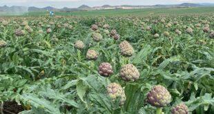 agricoltura sarda maltempo