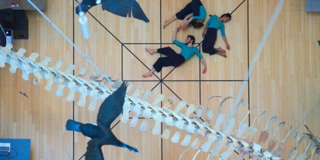 residenze digitali performing arts