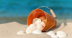 sabbia conchiglie mare id23011