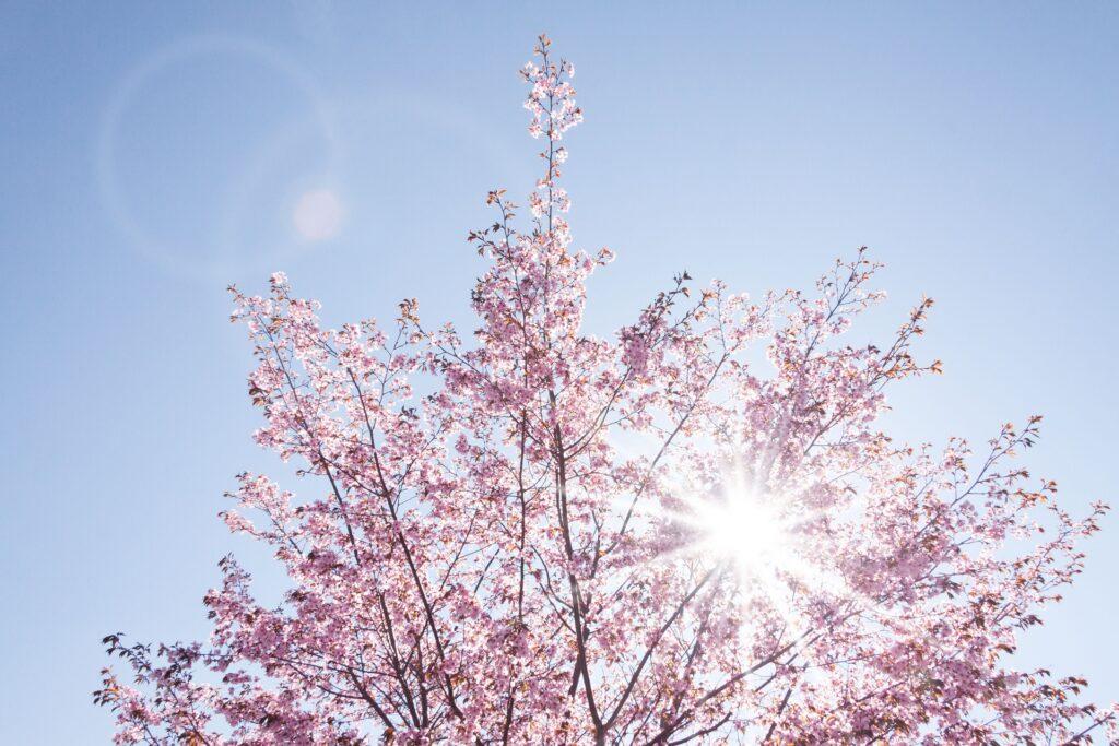 primavera Italia