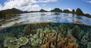 biodiversità lidl globalgap