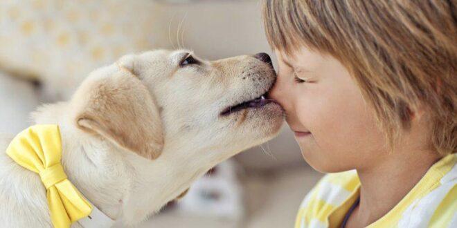 cani sentinella per riconoscere iperglicemia nei bambini