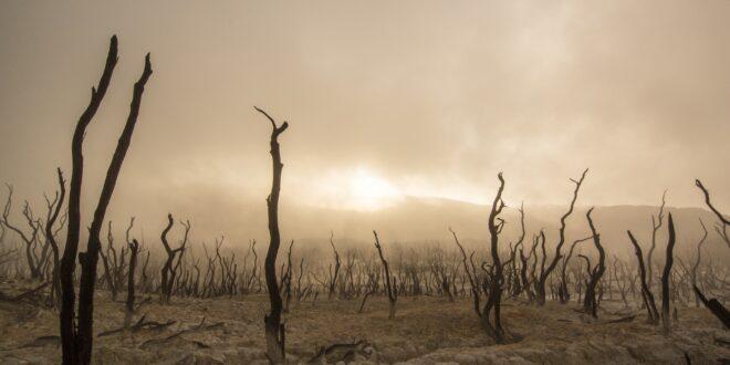 dead trees 947331 1920