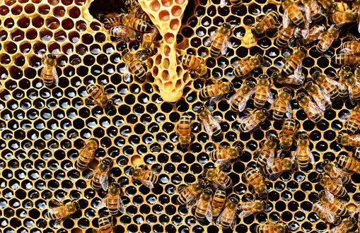 honey bees 337695 340