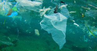 microplastiche inquinamento mare