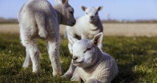 origine agnelli falsificata