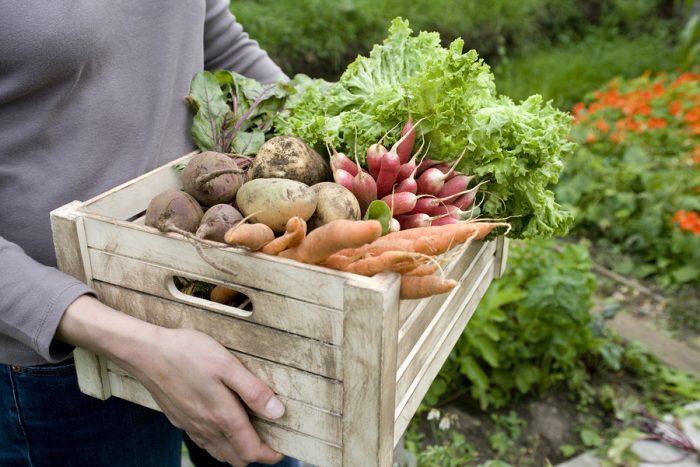 ortaggi nel giardino 700x467 1