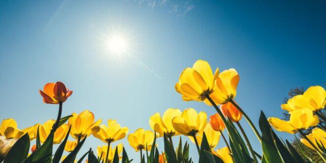 temperature in aumento massime come a maggiogiugno 3bmeteo 115454