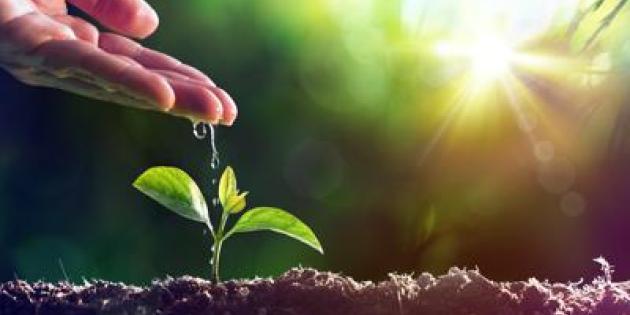 agricoltura pianta ftlia.jpg
